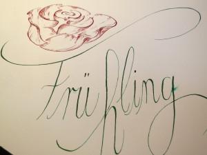 Rose Frühling 6